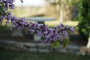 extérieur fleur
