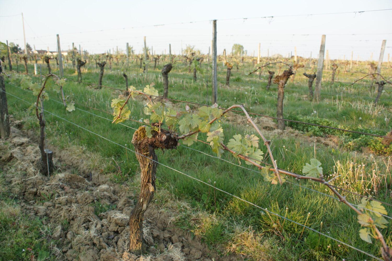 extérieur vigne