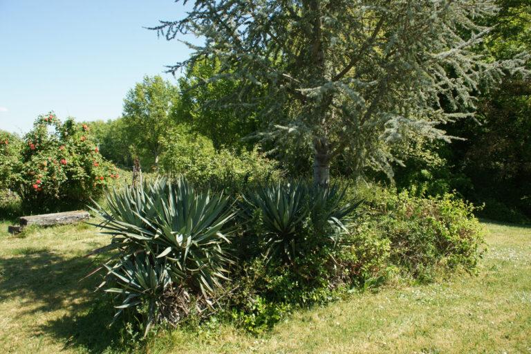 extérieur arbuste